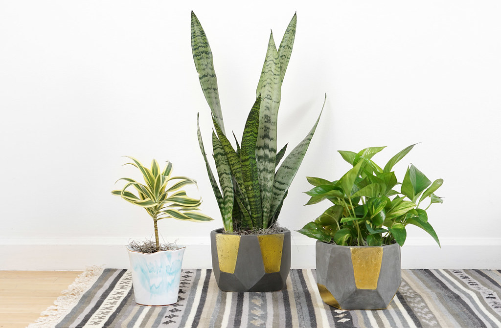 Houseplants for indoor decor that don't require a green thumb